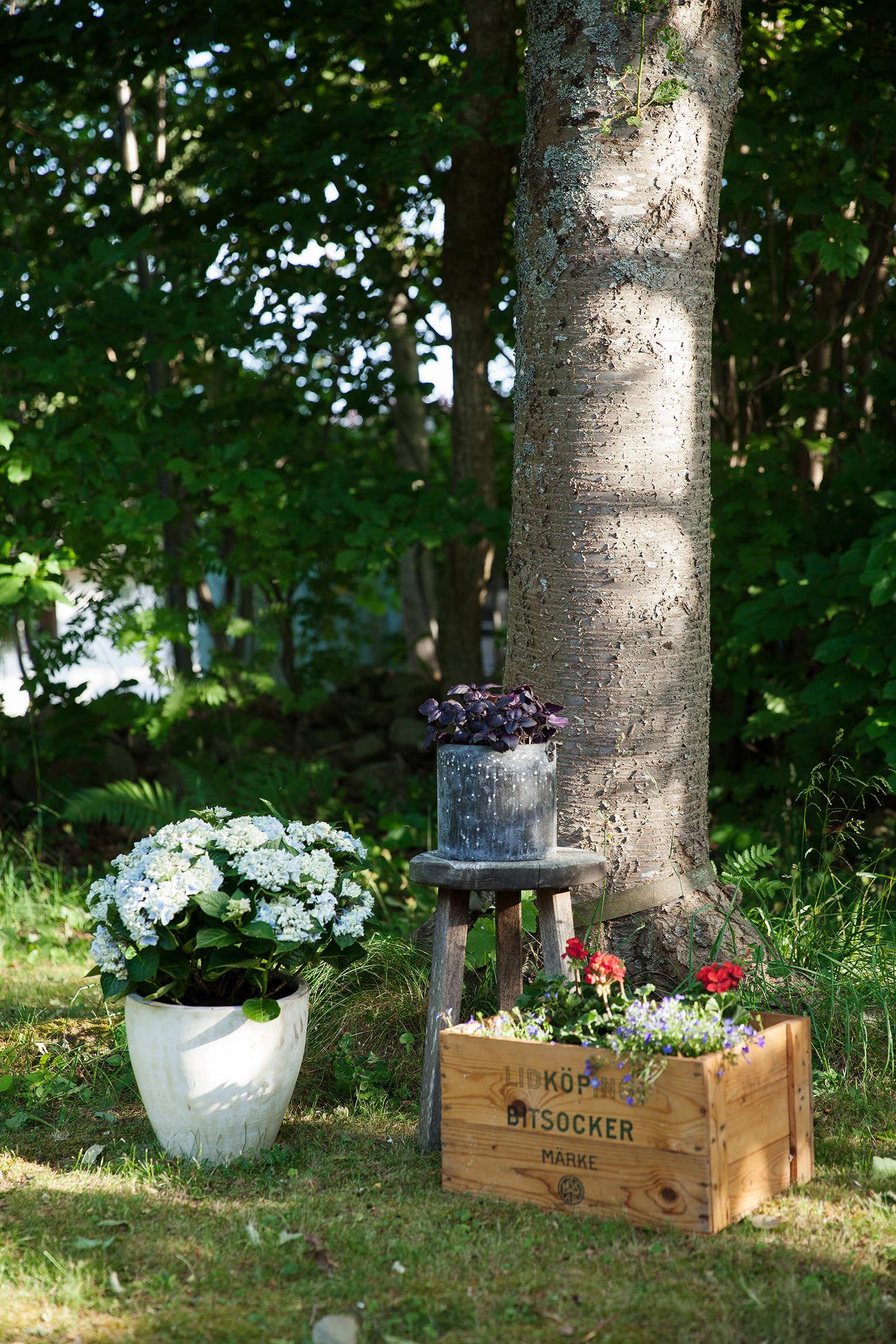 plantera i trädlådor
