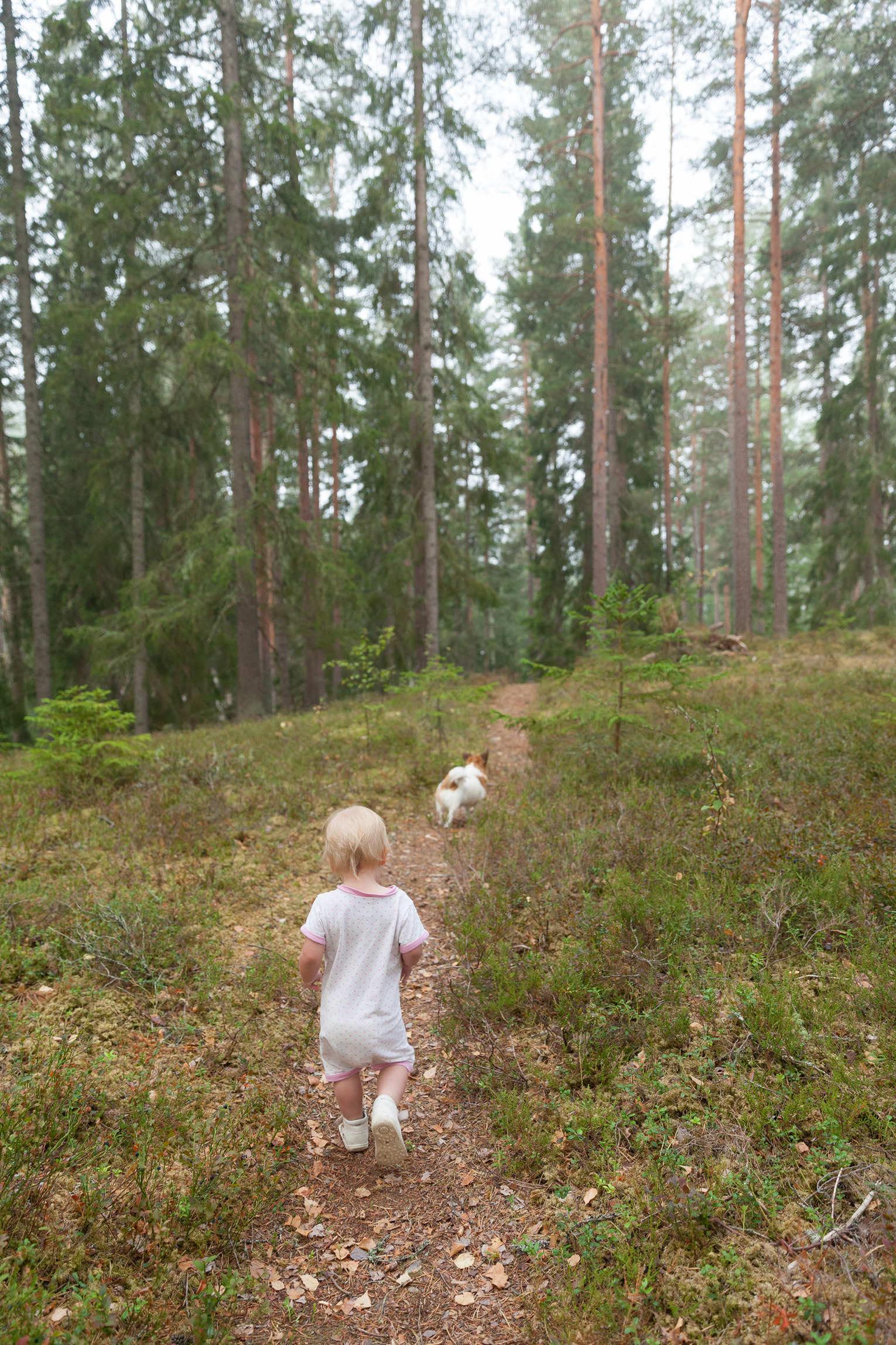 skog i småland