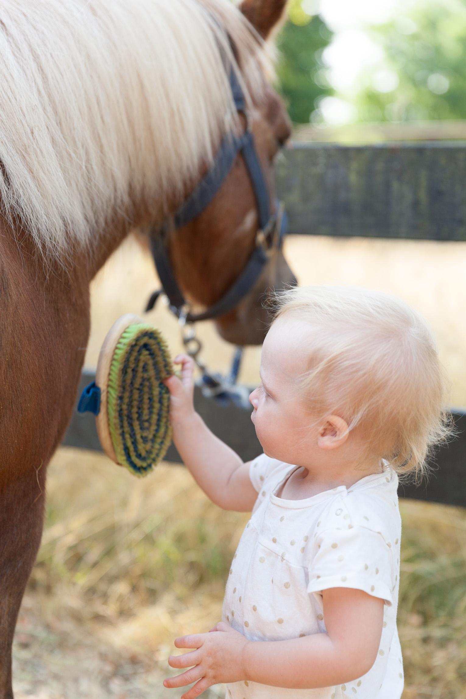 rykta häst