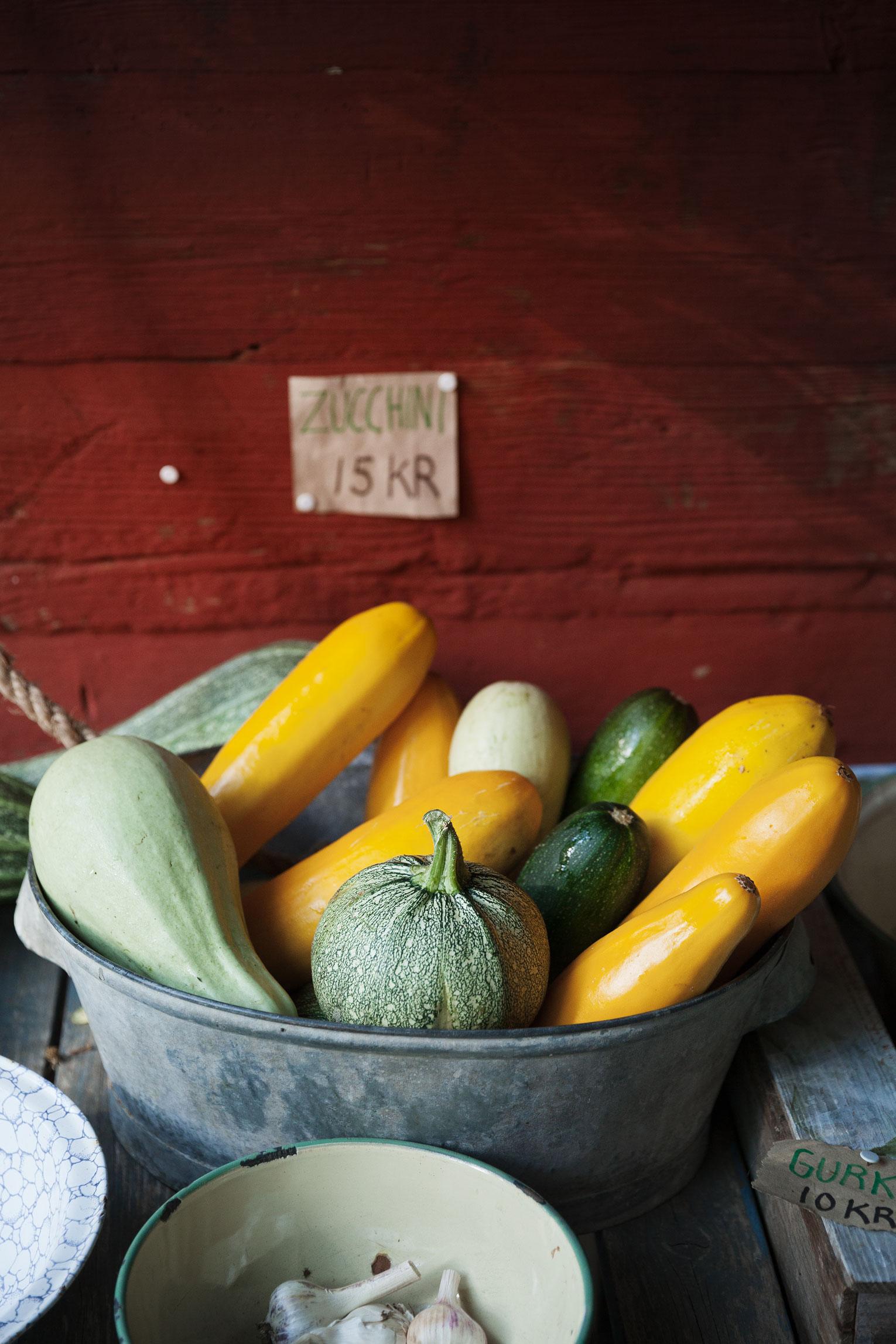 odla zucchini