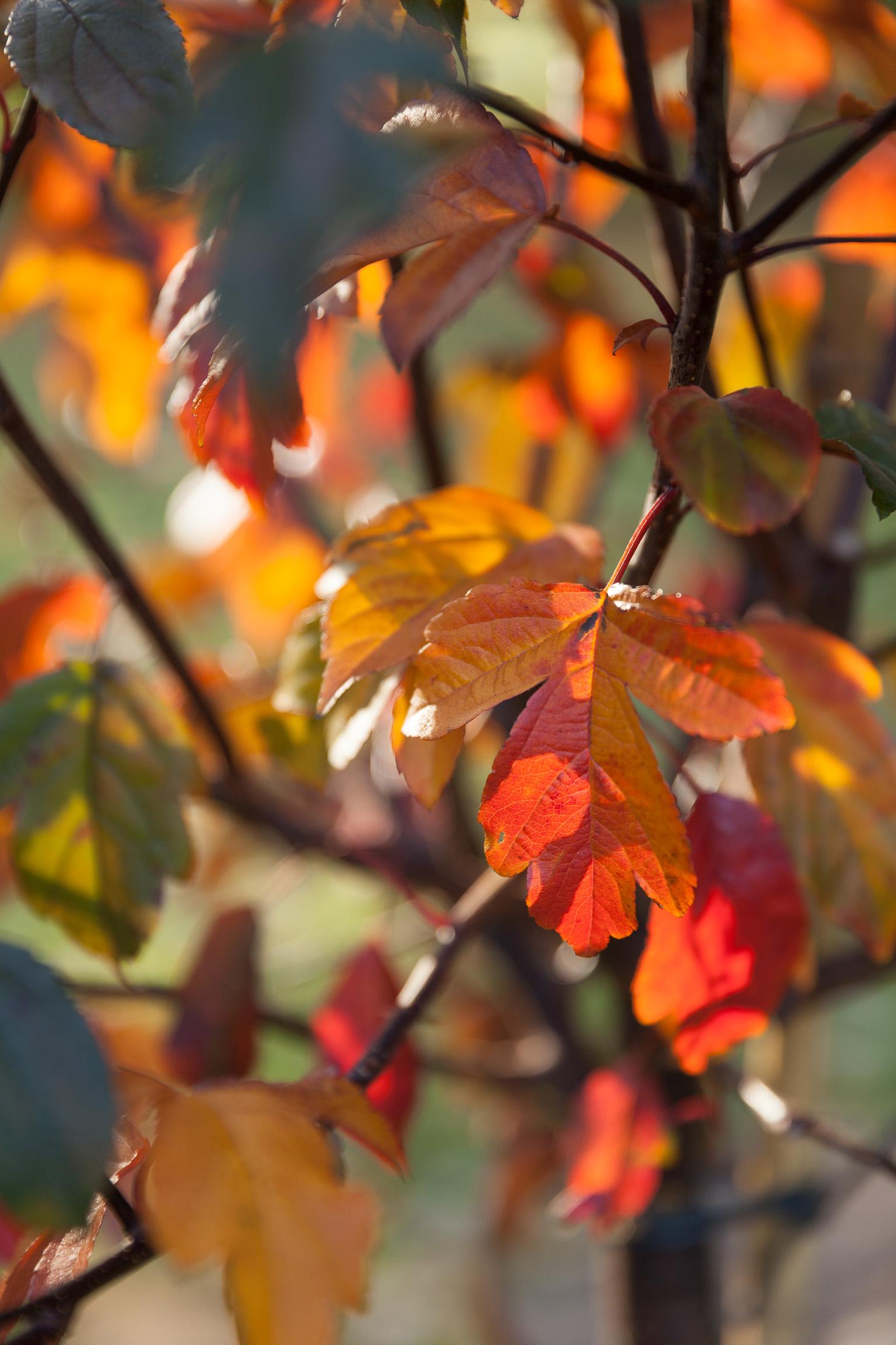 Höstfärger träd