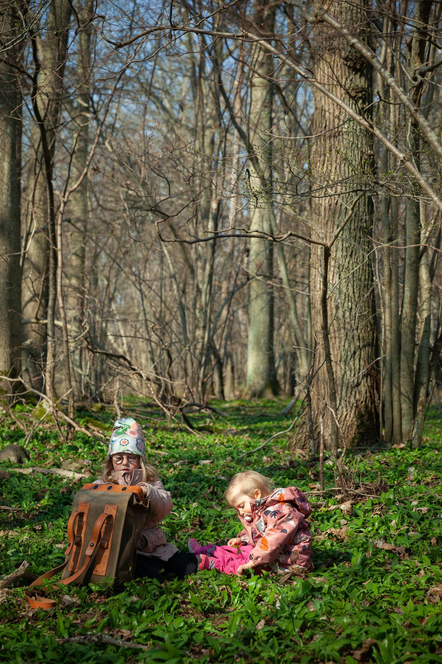 Ramslök skog