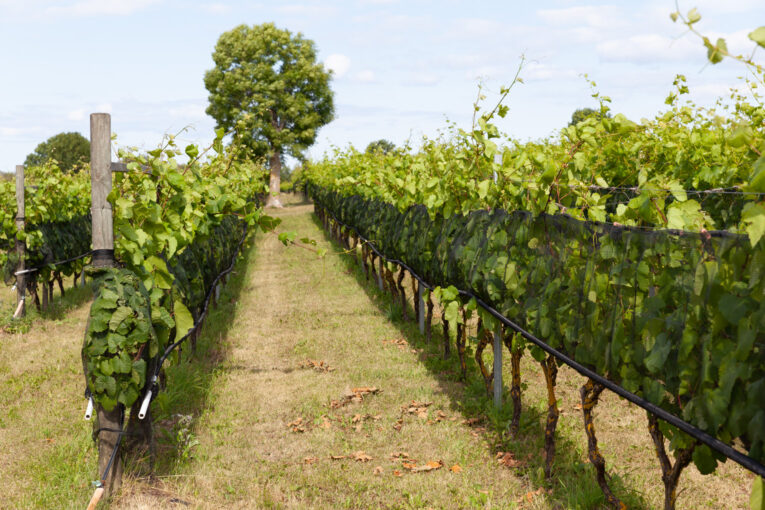 Wannborga vingård