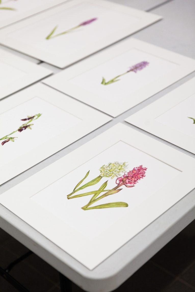 Orkidéer Emma Tinnert
