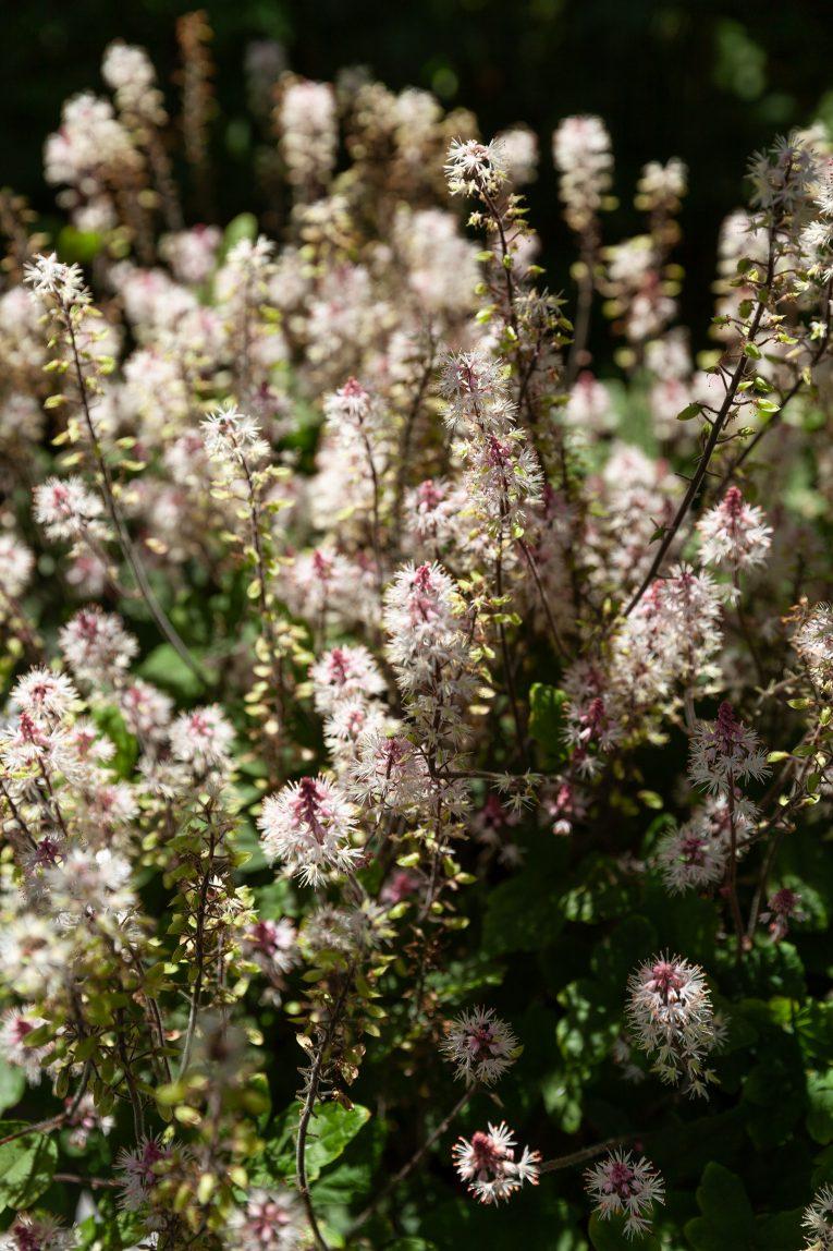 Fiddekulla blommor