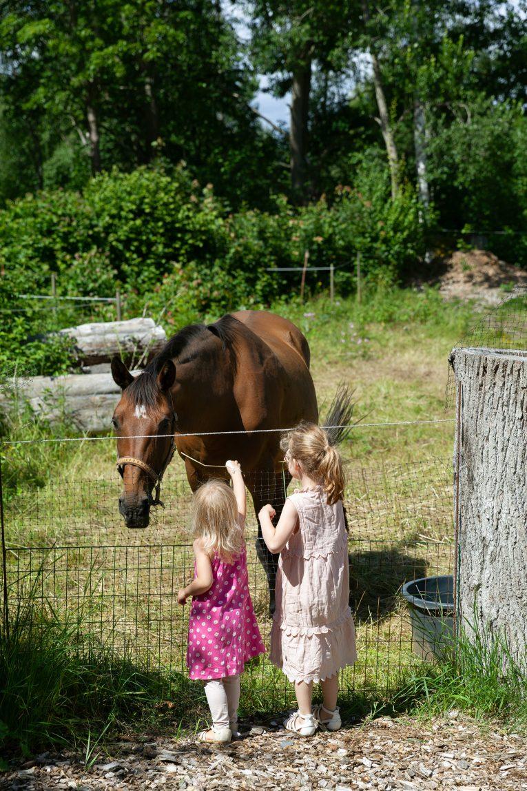 Fiddekulla hästar