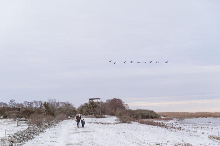 Fågelskådning Beijershamn