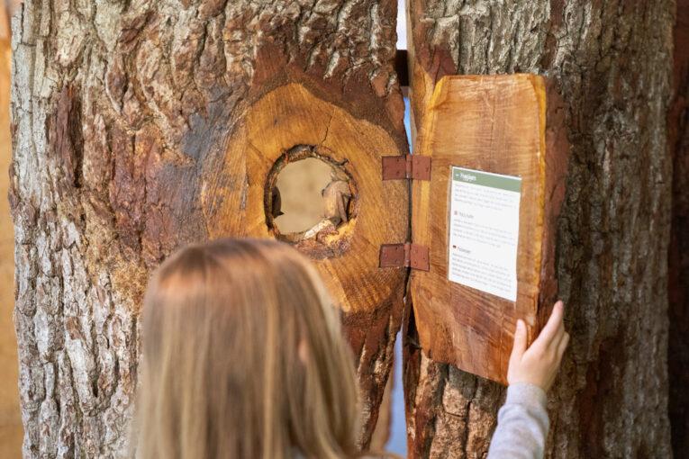 Naturum Trollskogen träd