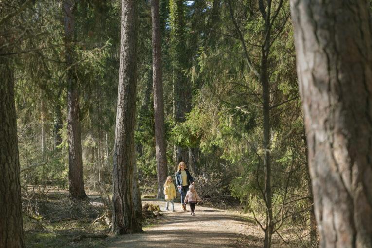 Trollskogen gångstig