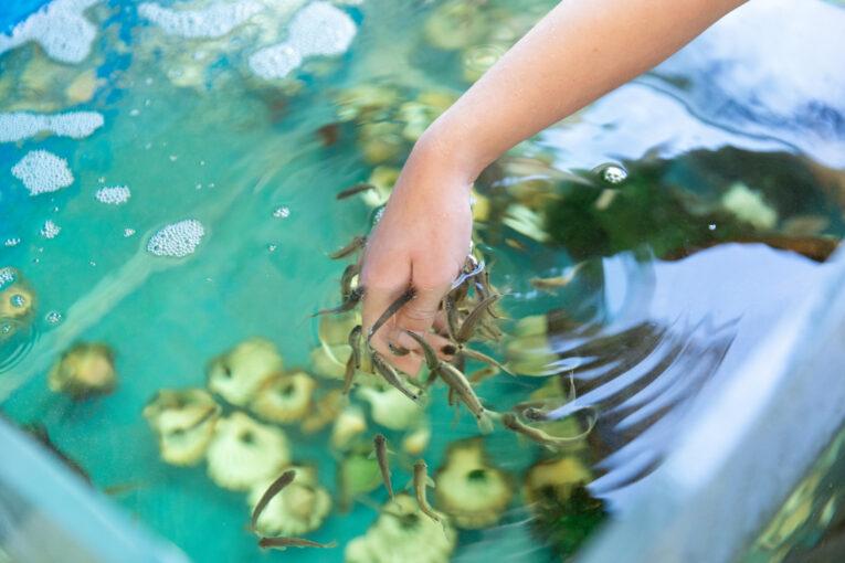 Böda Sand fiskspa