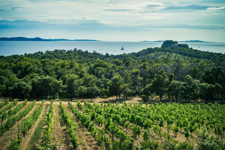 Provence viner
